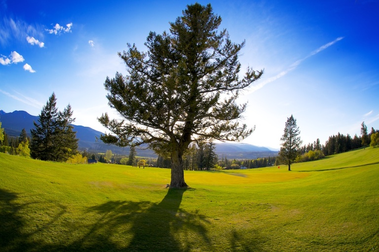 British Columbia Golf Course Tree landscape nature baklit-dustyriversphotography