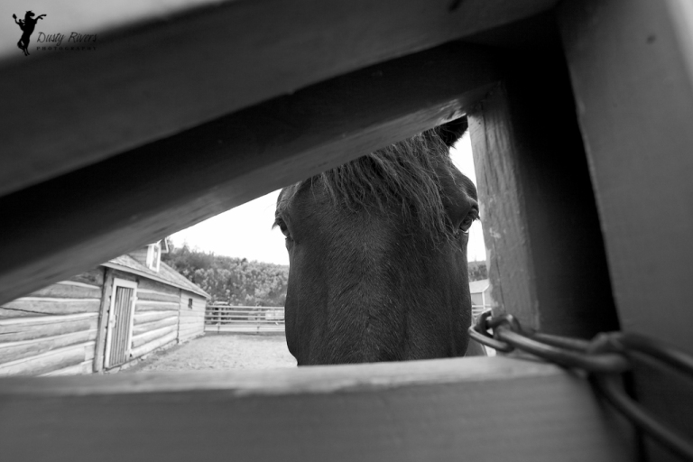 friendly horse peekaboo bar u ranch longview alberta black and white dusty rivers photography