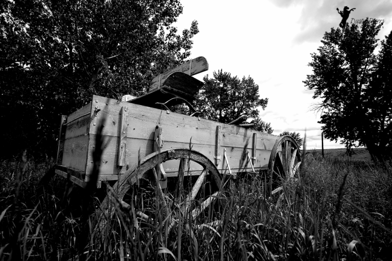 old horse drawn wagon bar u ranch longview alberta dusty rivers photography