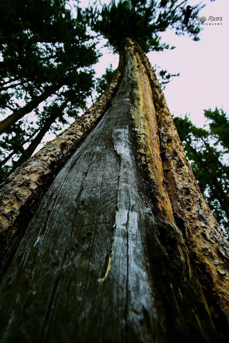 funky tree trunk lake minnewonka Banff Alberta dustyriversphotography