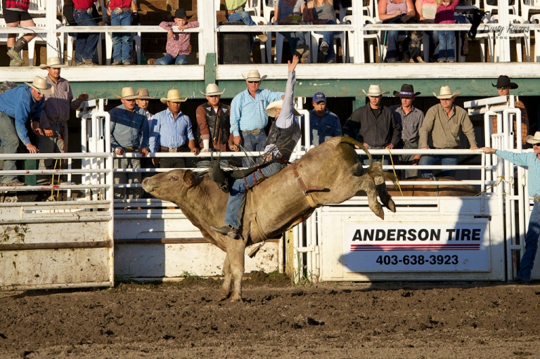 Sundre Rodeo grounds Bull Riding 3 Sundre Alberta dustyriversphotography