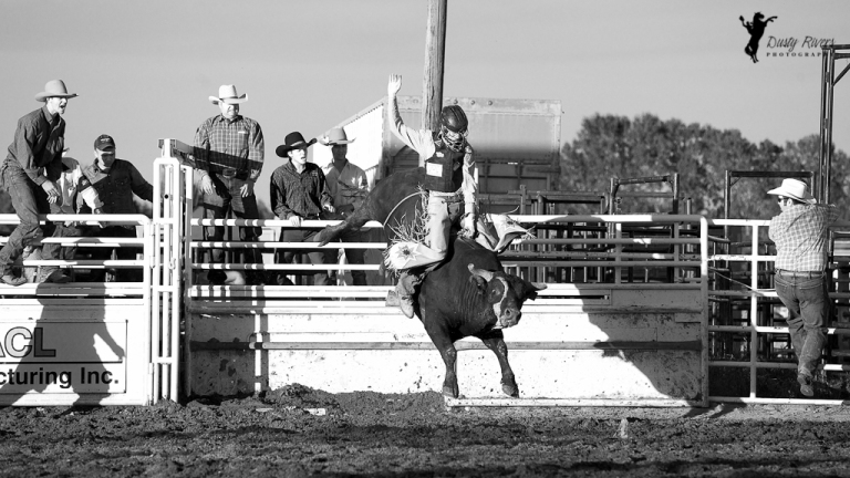 Sundre Rodeo grounds Bull Riding 4 Sundre Alberta dustyriversphotography