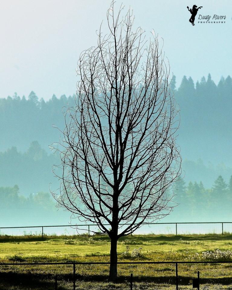 Dead Tree Sunrise Kalispell Montana USA dustyriversphotography