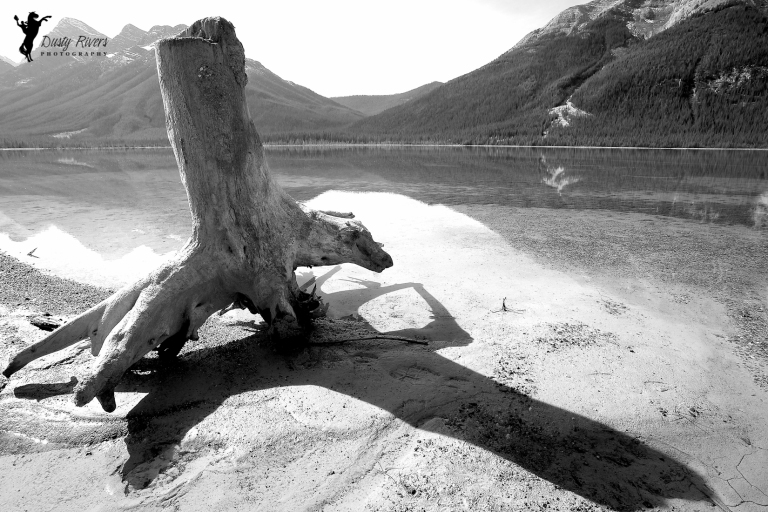 stump on the beach, black and white, fall, Spray Lakes, Canmore, Alberta, Canada, dustyriversphotography