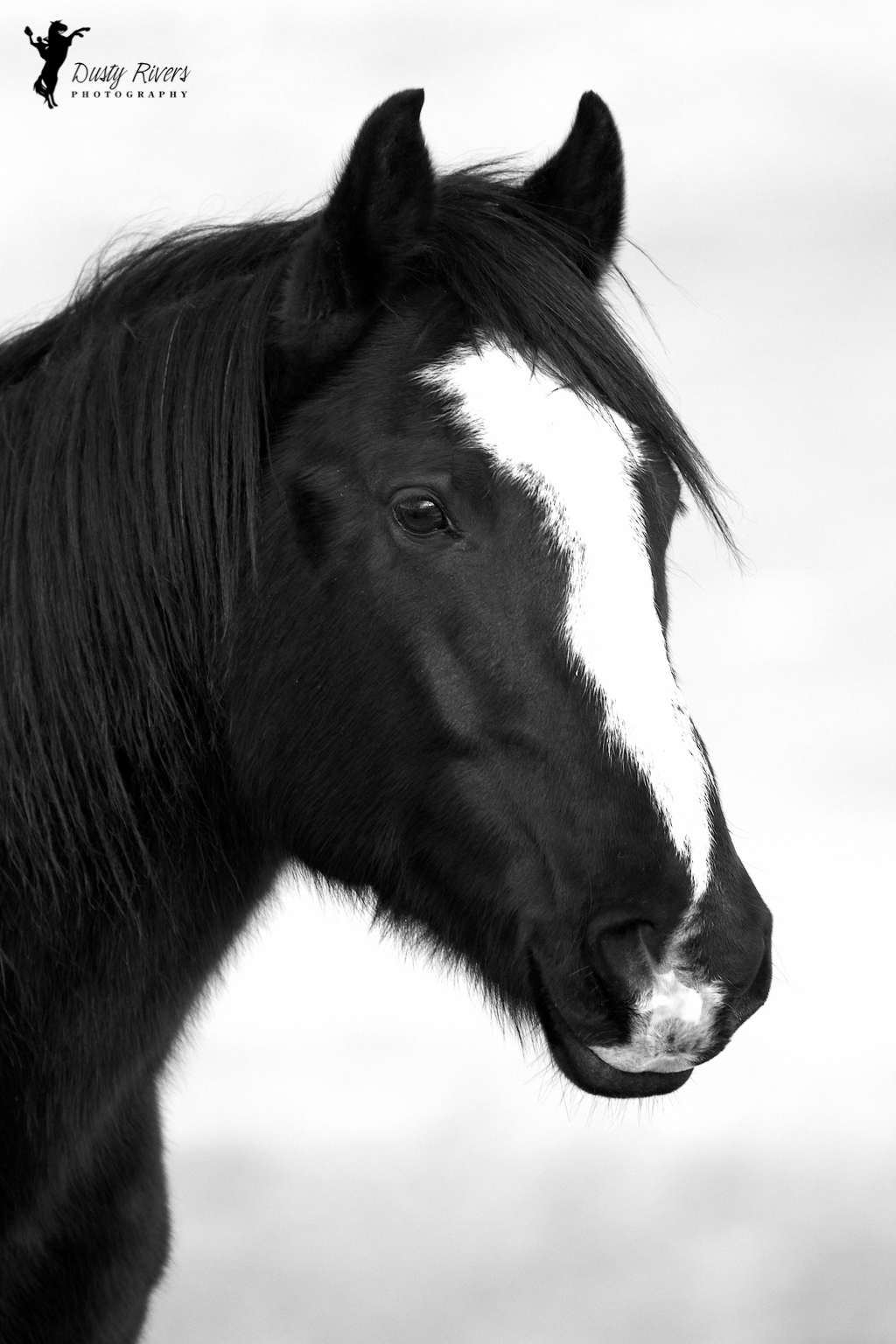 Black And White Horse Dusty Rivers Photography