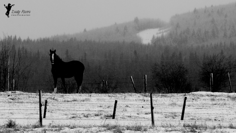 Black and White Horse, Horse, snowy day, landscape, Rockyview County, Calgary, yyc, Alberta, Canada, dustyriversphotography