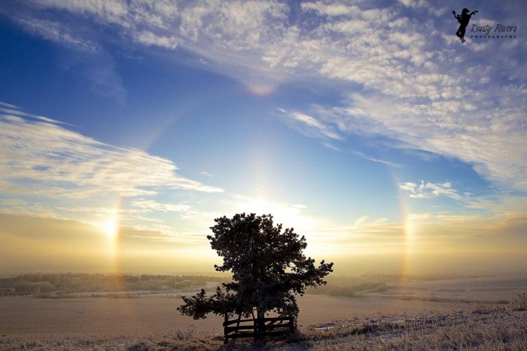 tree in a field, hazy rainbow, wide angle, landscape, Rockyview County, Calgary, yyc, Alberta, Canada, dustyriversphotography