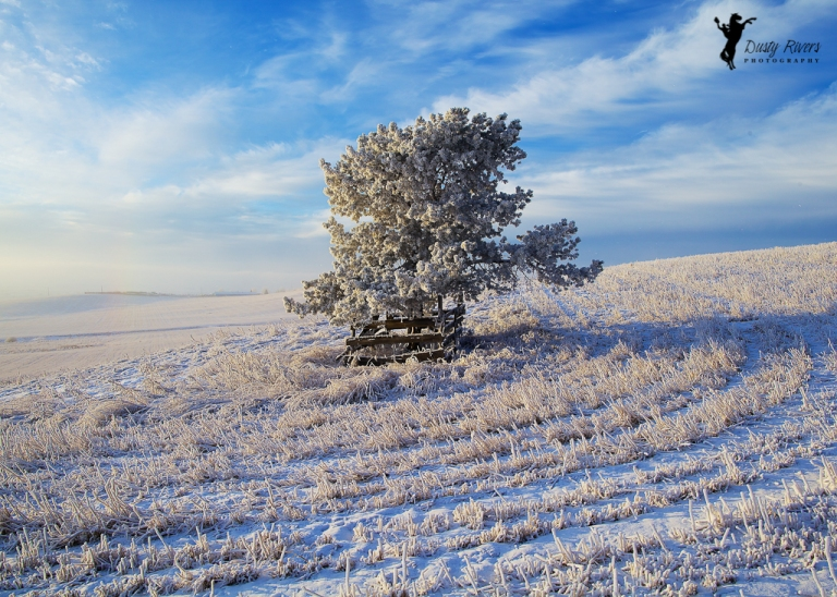 tree in a field, wide angle, landscape, Rockyview County, Calgary, yyc, Alberta, Canada, dustyriversphotography