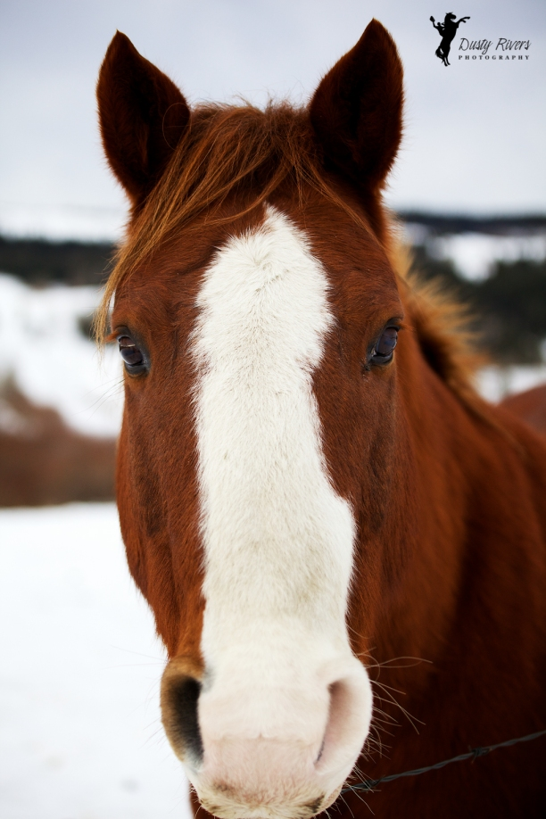 Random horse 2, Forestry Trunk Rd, Cochrane, winter, Calgary, yyc, Alberta, Canada, dustyriversphotography