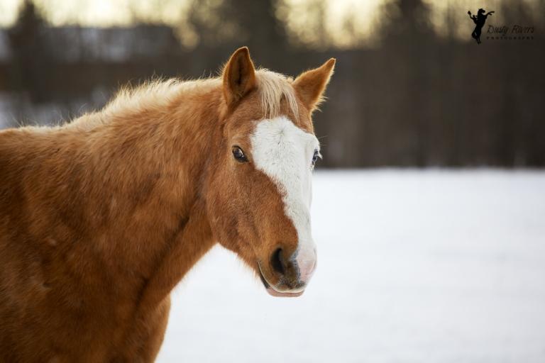 Random horse, Forestry Trunk Rd, Cochrane, winter, Calgary, yyc, Alberta, Canada, dustyriversphotography